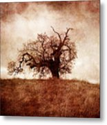 Lost And Wandering Metal Print