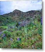 Lost Canyon Wildflowers Metal Print