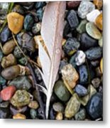 Lost Feather Metal Print