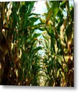Lost In Corn Metal Print
