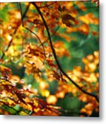 Lost In Leaves Metal Print