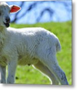 Lost Lamb Metal Print