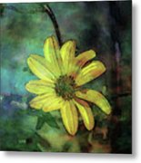 Lost Wild Flower In The Shadows 5771 Ldp_2 Metal Print