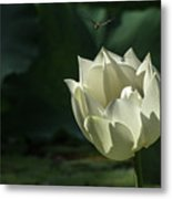 Lotos And Dragonfly Metal Print
