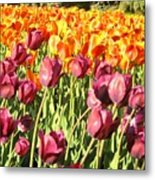 Lots Of Tulips Metal Print