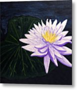Lotus Blossom At Night Metal Print