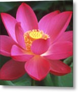 Lotus Blossom Metal Print by Elvira Butler