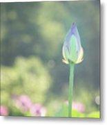 Lotus Bud In Garden Metal Print