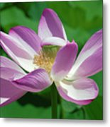 Lotus--center Of Being--protective Covering I Dl0087 Metal Print
