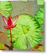 Lotus Flower Bloom In Pink 1 Metal Print