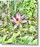 Lotus Flower Bloom In Pink 2 Metal Print