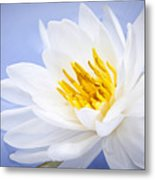 Lotus Flower Metal Print by Elena Elisseeva