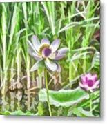 Lotus Flower On The Water Metal Print