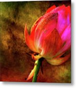 Lotus In Texture - A Present For A Friend Metal Print