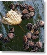 Lotus In The Lake Metal Print