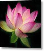 Lotus In The Limelight Metal Print