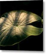 Lotus Leaves Morning  Shower Metal Print