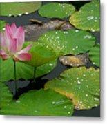 Lotus Pond  Metal Print