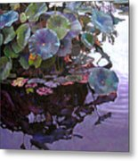 Lotus Reflections Metal Print