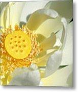 Lotus Up Close Metal Print