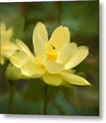 Lotus With Bee Metal Print