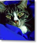 Louis And The Snuggy Metal Print