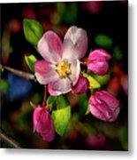 Louisa Apple Blossom 001 Metal Print