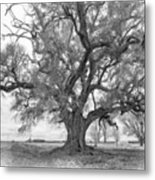 Louisiana Dreamin' Monochrome Metal Print