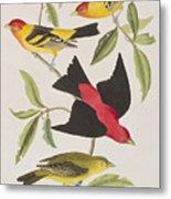 Louisiana Tanager Or Scarlet Tanager  Metal Print