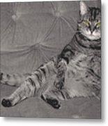 Lounge Cat Metal Print