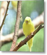 Lovable Little Budgie Parakeet Living In Nature Metal Print