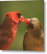 Love Is In The Air Cardinals Square Metal Print