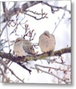 Love Is In The Air - Mourning Dove Couple Metal Print