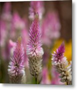 Love Lavender.... Metal Print