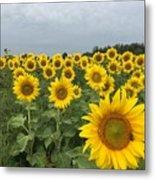 Love My Sunflowers Metal Print