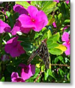 Love On The Wing Metal Print