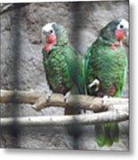 Love Parrots Metal Print