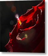 Love Rose Metal Print