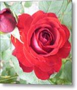 Love Roses Metal Print