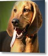 Loveable Hound Metal Print