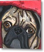 Loveable Pug Metal Print