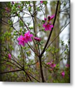 Lovely Bright Pink Flowers Metal Print by Eva Thomas