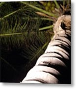 Lovely Bunch Of Coconuts Metal Print