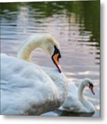 Lovely Couple Metal Print