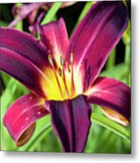 Lovely Day Lily Metal Print