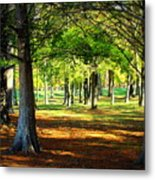 Lovely Grouping Of Trees In Mississippi Metal Print