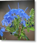 Lovely In Blue Metal Print