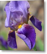 Lovely Leaning Iris Mother's Day Card Metal Print