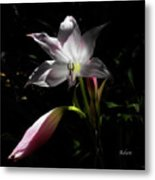 Lovely Lilies Partners Metal Print