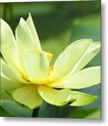 Lovely Lotus Metal Print